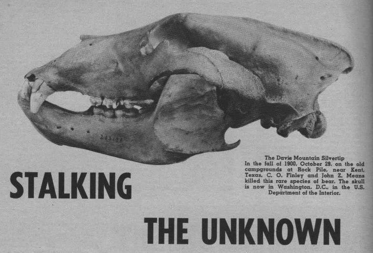 """Texas Grizzly Bear Skull from """"Stalking the Unknown"""""""