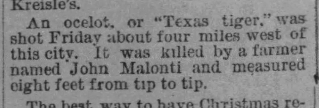 Newspaper clip of West Austin jaguar