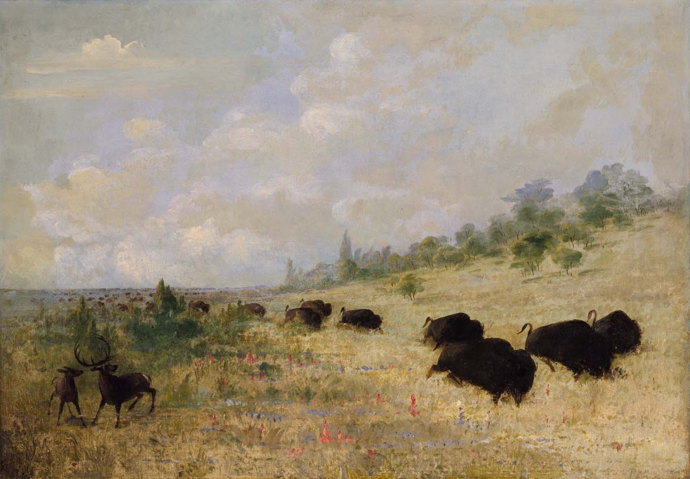 Buffalo and Elk in Texas - George Catlin
