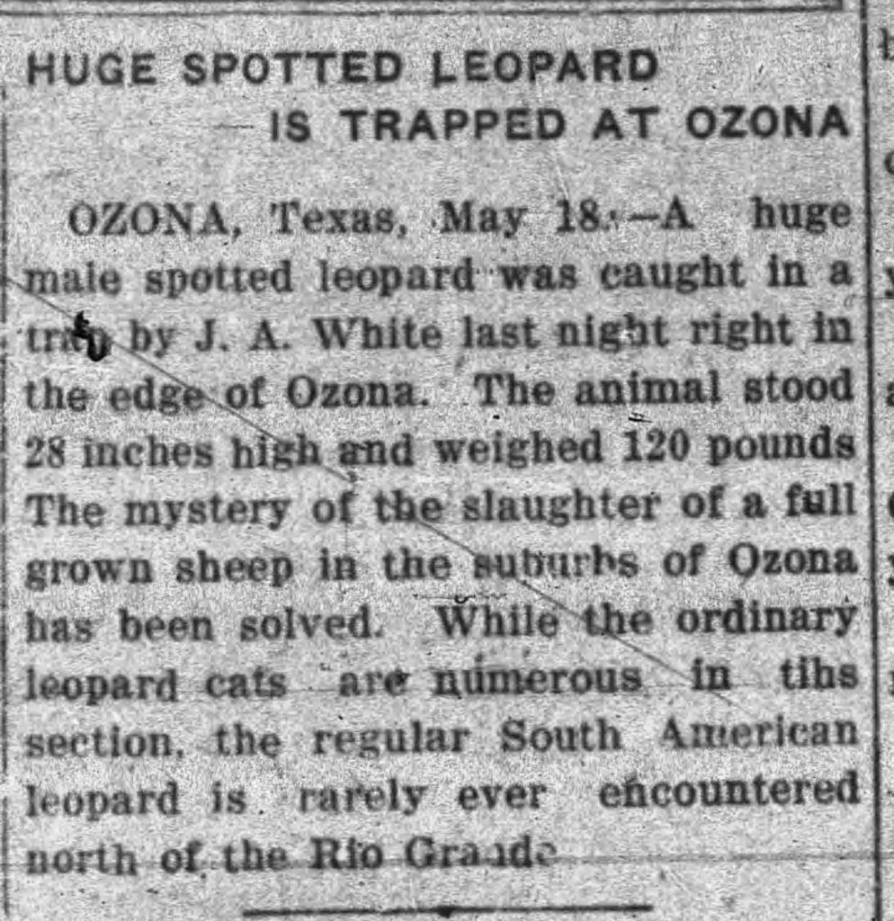 Leopard news clip