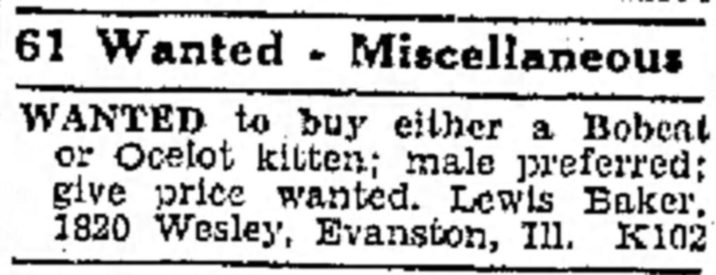 Texas Ocelot Classified Ad
