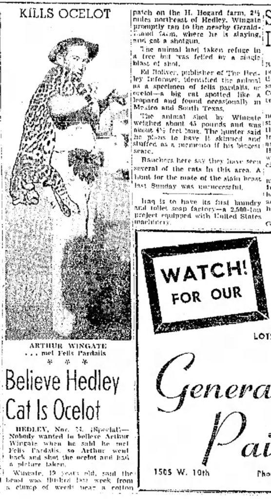 Hedley Texas Ocelot