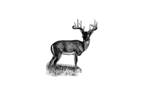 deer feature image
