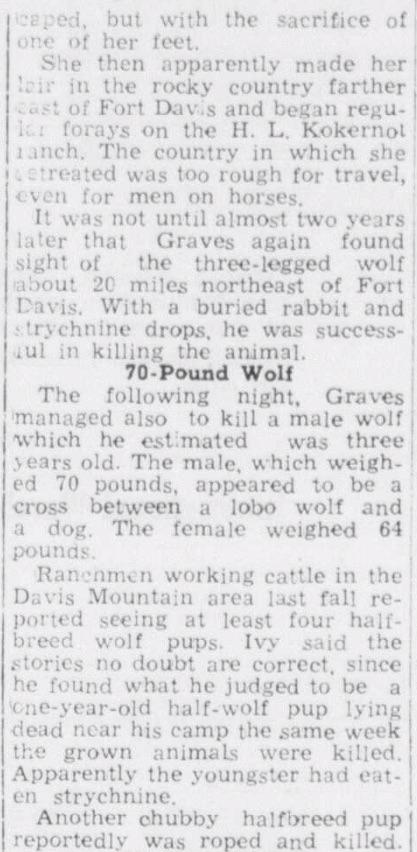 West Texas Lobo Wolf 3